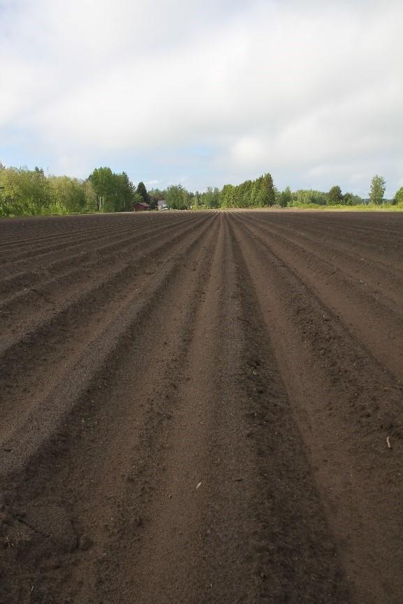 Monille yrteille sopii kasvualustaksi perunanviljelyssäkin käytettävät penkit.